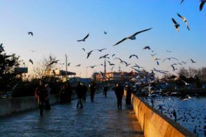 Küçükçekmece 'de Boğaziçiliden Türkçe Birebir @ Küçükçekmece | Istanbul | Türkiye